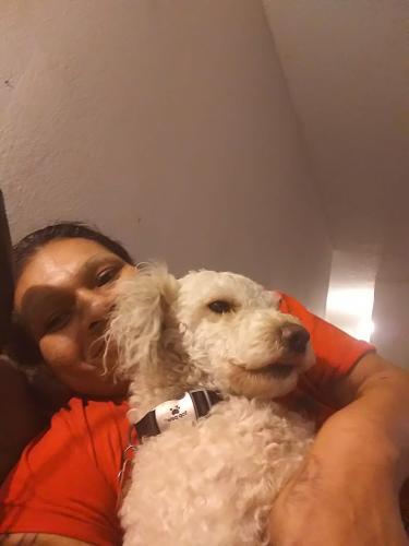 Lost Male Dog last seen Near S Slauson Ave & Barman St, Culver City, CA 90230