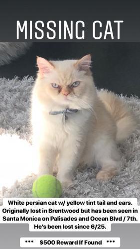 Lost Male Cat last seen Near Ocean & Palisades , Santa Monica, CA 90401