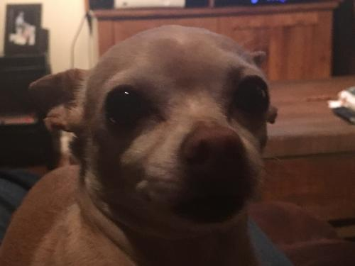 Lost & Found Dogs, Cats, and Pets in Longview, TX 75601