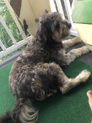 Found/Stray Unknown Dog last seen Kaloko and hwy 190, Pepeekeo, HI 96783