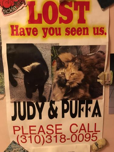 Lost Female Cat last seen Near Canton Dr & Berry, Los Angeles, CA 91604