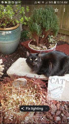 Lost Female Cat last seen Near Hillock Xing & Shire Reach, Virginia Beach, VA 23455