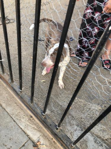 Found/Stray Male Dog last seen Near Leighton Ave & S Denker Ave, Los Angeles, CA 90018