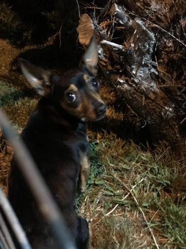 Found/Stray Unknown Dog last seen Near Mooney Dr & S Sefton Ave, Monterey Park, CA 91755