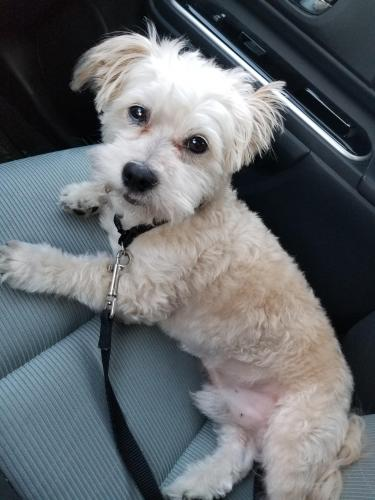 Found/Stray Male Dog last seen Palm St. & Clark Ave., Bellflower, CA 90706