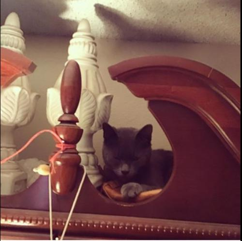 Lost Female Cat last seen Near Council St & N Alexandria Ave, Los Angeles, CA 90004