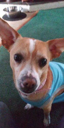 Lost Male Dog last seen Near E 67th Way & N Hammond Ave, Long Beach, CA 90805