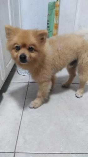Found/Stray Male Dog last seen Near W 83rd St & S Normandie Ave, Los Angeles, CA 90047