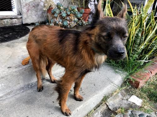 Found/Stray Male Dog last seen Near Inglewood Blvd & Aneta St, Los Angeles, CA 90230