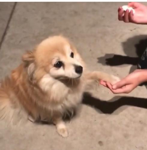 Lost Female Dog last seen Near Berendo Ave & W 134th Pl, Gardena, CA 90247