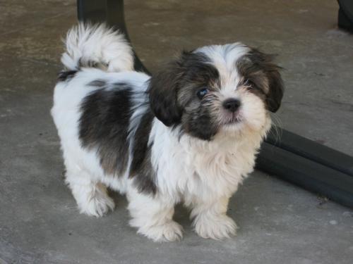 Found/Stray Female Dog last seen Near W Jefferson Blvd & S Broadway, Los Angeles, CA 90007