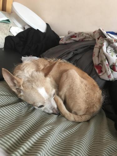 Found/Stray Male Dog last seen Near Badminton Ave & Mystic St, Whittier, CA 90605