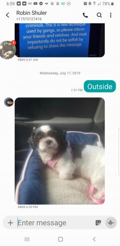Lost Female Dog last seen Near Grand St & Carver Cir, Portsmouth, VA 23701