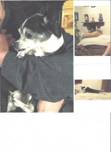 Lost Female Dog last seen Near Jaboneria Rd & Lanto St, Bell Gardens, CA 90201