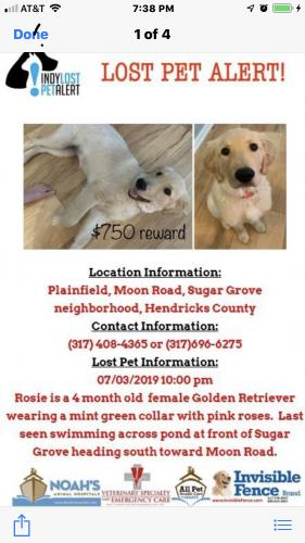 Lost & Found Dogs, Cats, and Pets in Fishers, IN 46235 - Page 1