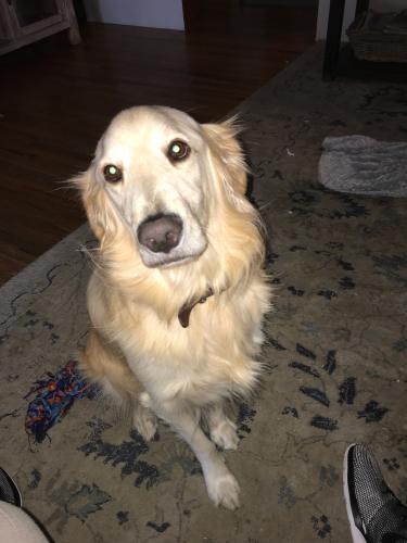 Lost Male Dog last seen Near Saint Clair Ave & Tiara St, Los Angeles, CA 91607