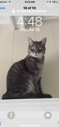 Lost Male Cat last seen Near Harris Rd & Litchfield Rd, Virginia Beach, VA 23452