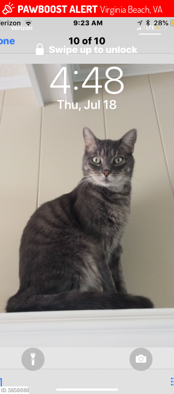 Lost Male Cat last seen Near Harris Rd & Litchfield Rd, Virginia Beach, VA 23452