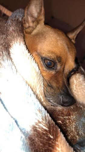 Lost Female Dog last seen Near Deanne Dr & Dodrill Dr, Hacienda Heights, CA 91745