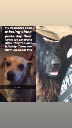 Lost Male Dog last seen Near W Adams St & Fenter Ave, Long Beach, CA 90805