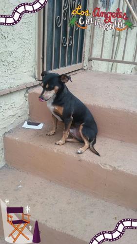 Lost Male Dog last seen Near E 43rd Pl & Crocker St, Los Angeles, CA 90011