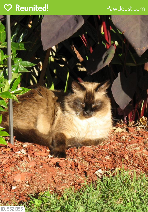 Reunited Male Cat last seen Near Denton Dr & Mansford Dr, Hampton, VA 23664