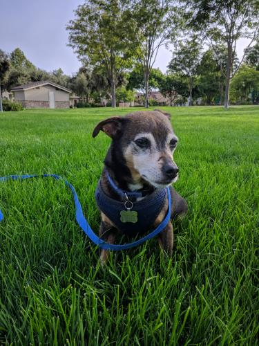 Lost & Found Dogs, Cats, and Pets in Santa Cruz, CA 95060 - Page 5