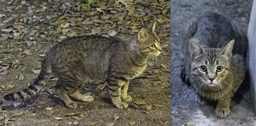 Found/Stray Unknown Cat last seen Near Jefferson Ave & Denbigh Blvd, Newport News, VA 23602