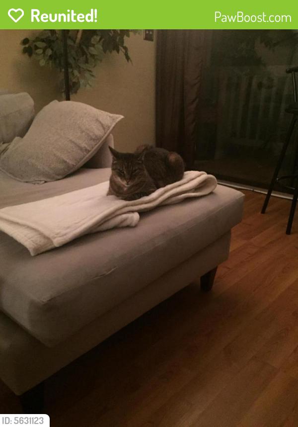 Reunited Female Cat last seen Near Sea Shell Rd & Shore Drive, Virginia Beach, VA 23451