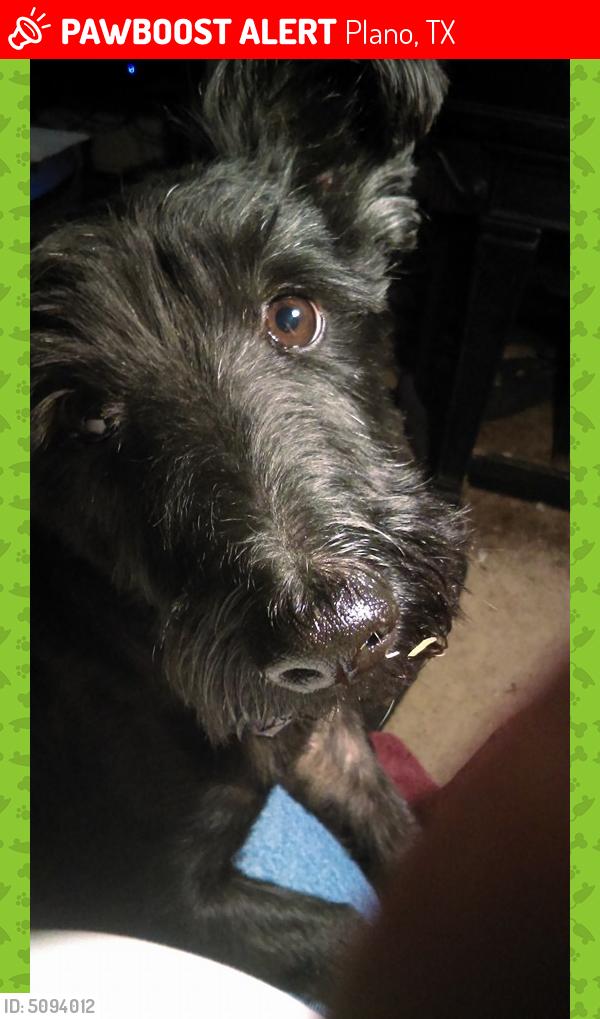 Lost Male Dog last seen Near Bronco Ln & Lonesome Trl, Plano, TX 75023