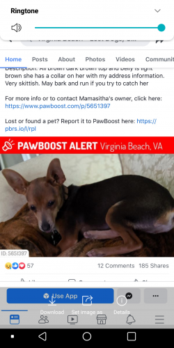 Found/Stray Female Dog last seen Near 25th St & Pacific Ave, Virginia Beach, VA 23451