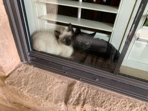 Lost & Found Dogs, Cats, and Pets in New Braunfels, TX 78130