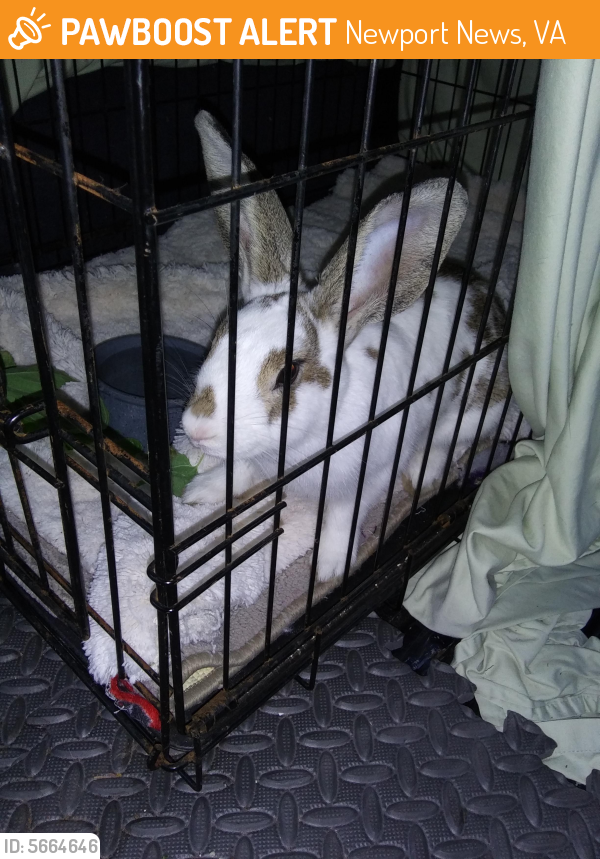 Found/Stray Unknown Rabbit last seen Near Arnold St & Orcutt Ave, Newport News, VA 23605