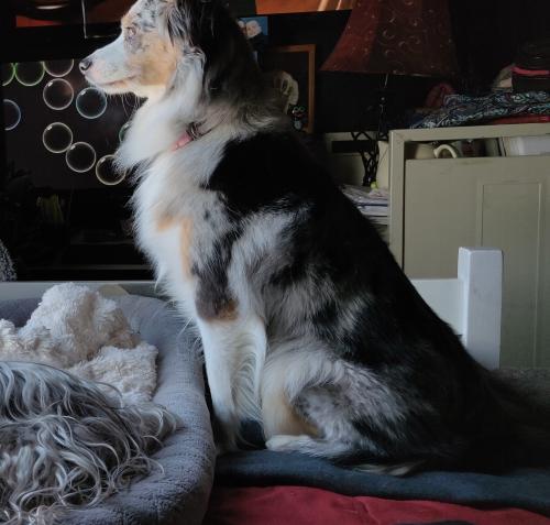 Lost Female Dog last seen Near Fair Meadows Rd & Virginia Beach Blvd, Virginia Beach, VA 23462