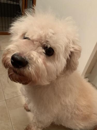 Found/Stray Male Dog last seen Between N Rosemont Rd & Holland Rd, Virginia Beach, VA 23452