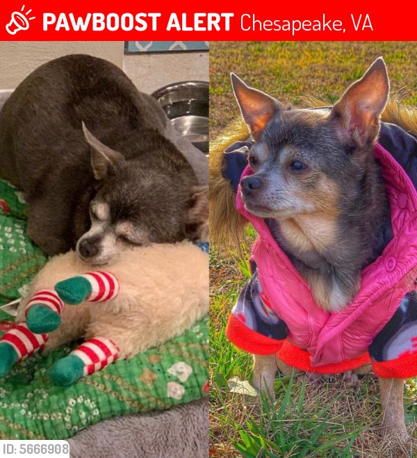 Lost Female Dog last seen Near Sir Kay Dr & Sir Kay Ct, Chesapeake, VA 23323