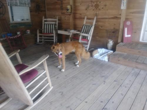 Found/Stray Male Dog last seen Near Price St & Jefferson St, Nederland, TX 77627