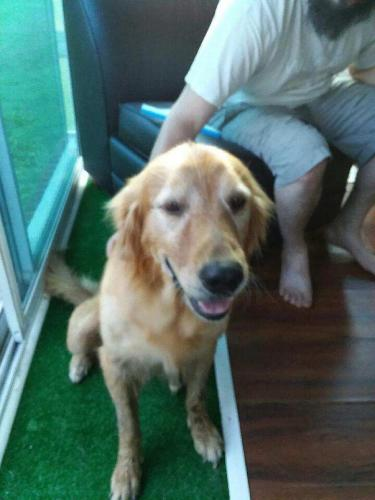 Found/Stray Male Dog last seen Near Lindale Dr & Waterfield Ave, Chesapeake, VA 23320