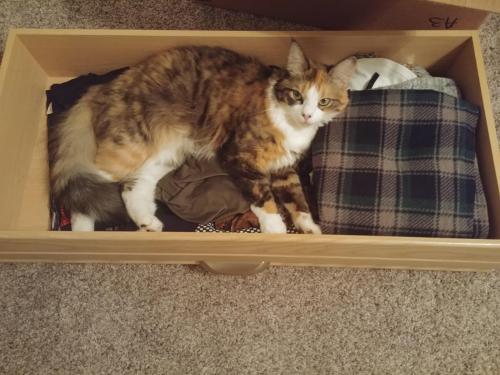 Lost Female Cat last seen Near Crown Point Dr & Minuteman Dr, Newport News, VA 23602