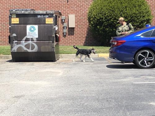 Found/Stray Male Dog last seen Near Rogers Ave & Evergreen Ave, Norfolk, VA 23505
