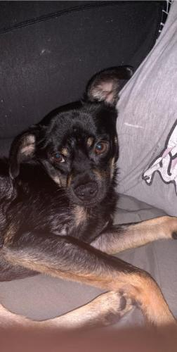 Lost Male Dog last seen Near Queens Row & 21st St, Beaumont, TX 77706