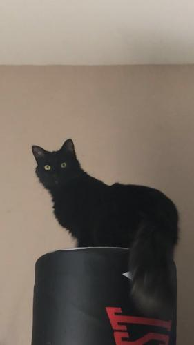 Lost Male Cat last seen Near Overland Rd & Allyne Rd, Virginia Beach, VA 23462