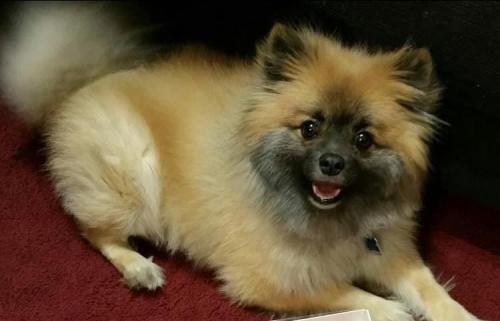 Lost Male Dog last seen Near Monticello Ave , Norfolk, VA 23510
