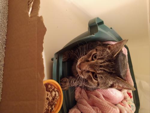 Found/Stray Unknown Cat last seen Near Bridgewater Dr & Misty Point Ln, Newport News, VA 23603