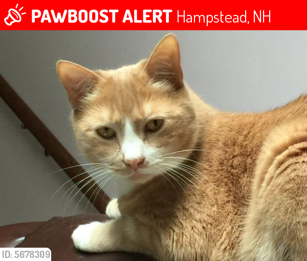 Lost Male Cat In Hampstead Nh 03841 Named Pookey Id