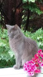 Lost Pets - McKamey Animal Center