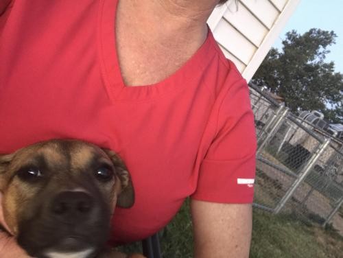 Lost & Found Dogs, Cats, and Pets in Amarillo, TX 79107 - Page 1