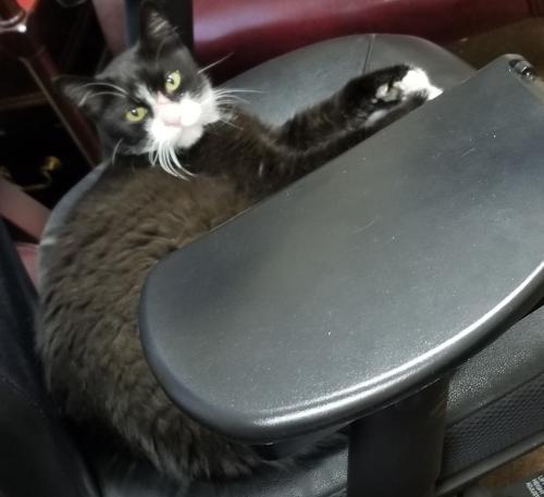 Found/Stray Male Cat last seen Chandler Blvd / Hearthstone Way, Chandler, AZ 85226