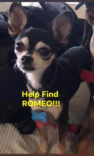 Lost & Found Dogs, Cats, and Pets in South Carolina 29536