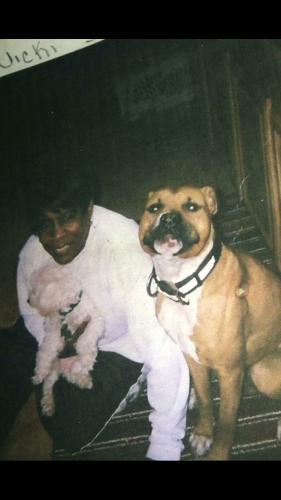 Lost Male Dog last seen Near Victoria Blvd & Concetta St, Hampton, VA 23661